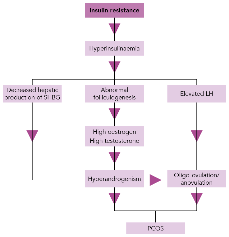 3476_Fig-1.-Hormonal-influences-on-the-development-of-polycystic-ovary-syndrome.png