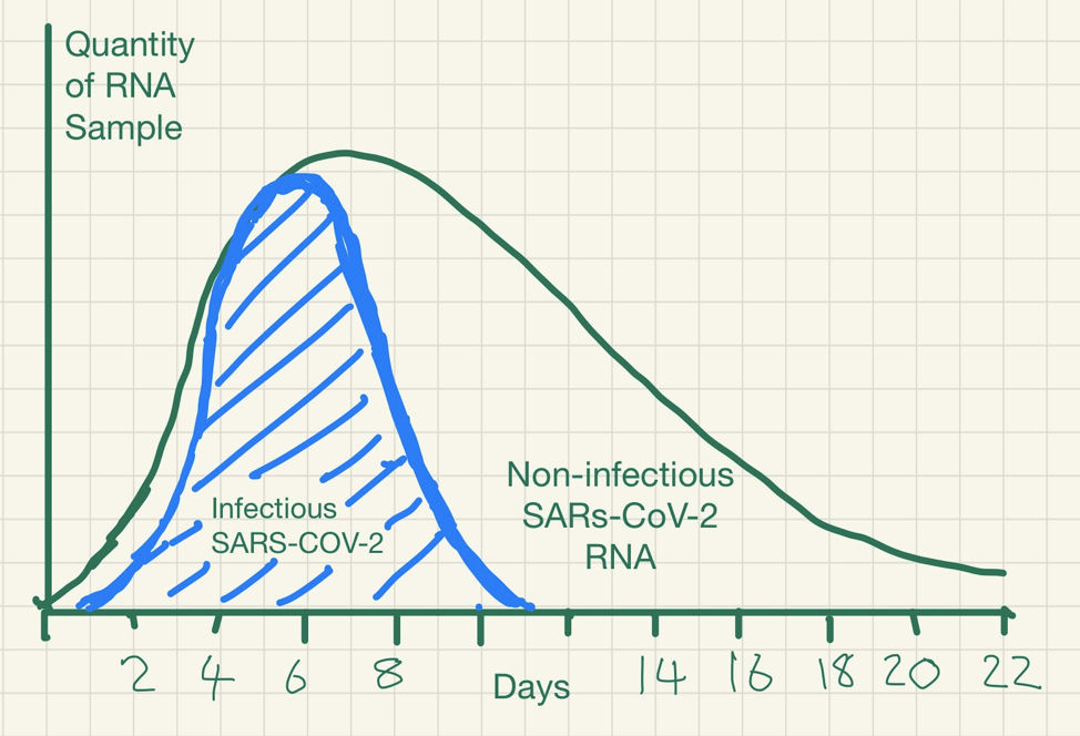 PCR-detection-of-viruses.png